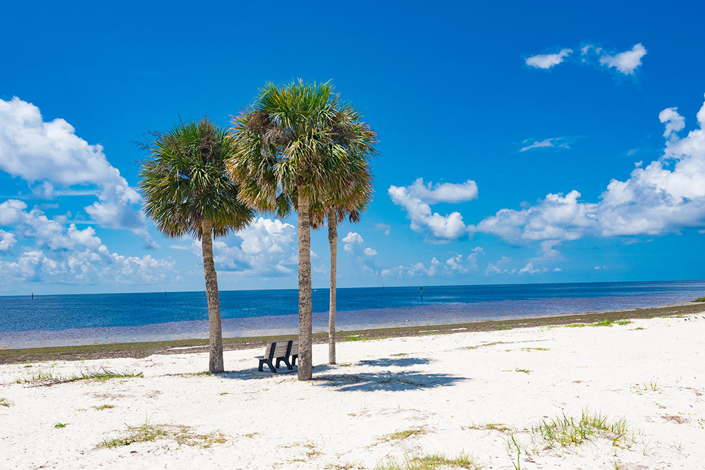 A trio of sabal palms on the Gulf of Mexico with a park bench in the shade.